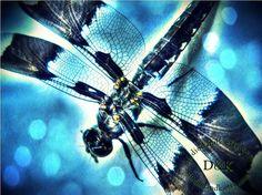 Dragonfly Fine Art Photography Print in Blue by StudioDandK, $20.00