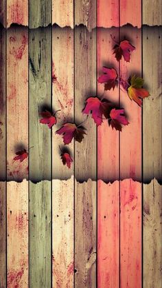Autumn leaves, wood fence, iPhone android cellphone wallpaper background lock screen