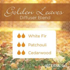 Golden Leaves diffuser blend: White Fir, Patchouli, and Cedarwood