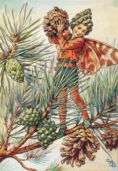 Pine Tree Fairy Illustration - Cicely Mary Barker                                         LB XXX.