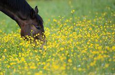 Ingwer ist für Pferde nicht harmlos #News #Wohnen