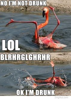 Haha this is one of the best drunk animal memes that I've seen.