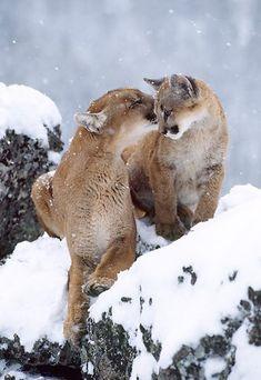 Beautiful Pictures Amazing : Photo
