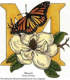 Butterfly Alphabet Coloring Book Welcome To Dover Publications Full Color Page 2