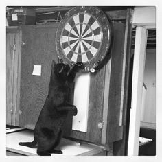 Twitter / Gallery - #darts #cats #animals #instalove #instagood @TommySee22