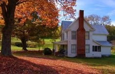 a carpet of colorful leaves around the farmhouse