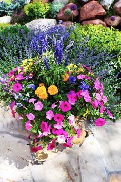 Annual Flowers in Pots | Annual Flower Pots | cathymarkle