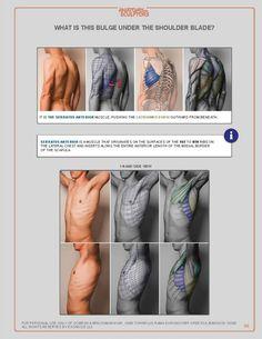 Marina Suzdaltseva   VK Male Figure Drawing, Figure Drawing Reference, Anatomy Sketches, Anatomy Drawing, Human Reference, Anatomy Reference, Anatomy Study, Anatomy Art, Arte Com Grey's Anatomy