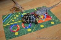 Turtle, Kids Rugs, Pets, Animals, Home Decor, Turtles, Animales, Decoration Home, Kid Friendly Rugs