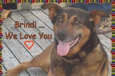 My dog Brindi is still being held in a cage by the city of Halifax, Nova Scotia. The city wants to kill her even though it had no good reason to seize her in the first place in 2008. I have been trying to get her to safety for all this time. I tried all ways of negotiating and cooperating, in vai...