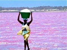 A woman harvesting salt from the Lac Rose, Sénégal