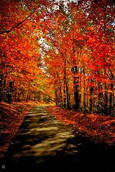 Roanoke Mountain, off the Blue Ridge Parkway...I dream about talking long walks down roads like this...talking to Jesus as I walk!!