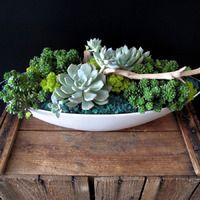 Lovely succulent plants in a low bowl. Succulent Ideas, Succulent Plants, Planting Succulents, Cacti, The Great Outdoors, Greenery, Centerpiece, Fairy, Design Inspiration