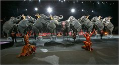 circus elephants -
