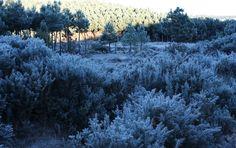 Geada forte cobriu de gelo grandes áreas de vegetação em Cambará do Sul