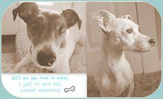 My babies : )  #Dogs  #Animals