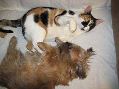Shiloh & Renata. Best of friends.