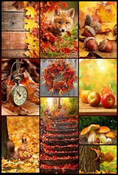 Pumpkin Pictures, Fall Pictures, Fall Photos, Apple Harvest, Harvest Time, Fall Harvest, Autumn Decorating, Fall Decor, Merry Christmas Gif