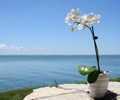 thoughts on taking orchids outside during the summer