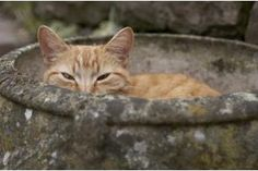 How to Make Cats Stop Pooping in Flower Beds and Gardens | eHow