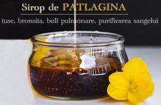 Sirop de patlagina - remediu vechi pentru tuse, bronșite, boli de plămâni Alcoholic Drinks, Wine, Glass, Food, Syrup, Drinkware, Corning Glass, Essen, Liquor Drinks