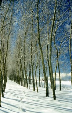 """See 2 photos and 2 tips from 11 visitors to Monte Poro. """"Get the free touristic guide """"Pronto Estate"""" to discover in a better way this part of Calabria. 2 Photos, Snow, Outdoor, Outdoors, Outdoor Games, Outdoor Living, Eyes"""