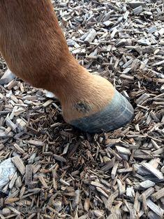 Mauke Pferd