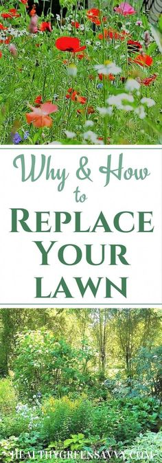 Replace your lawn: Grass alternatives save you money, time, and water, while reducing greenhouse gas emissions. Find out how easy it is to convert some of your lawn to eco-friendly grass alternatives! Water Garden, Lawn And Garden, Eco Garden, Bamboo Garden, Permaculture, Aesthetic Header, No Grass Backyard, Green Living Tips, Organic Gardening Tips
