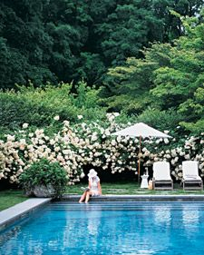 From Martha Stewart. Living. Hedge of Hydrangeas around pool and patio designed by architect Jefrey Hall.