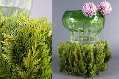 Green Inspiration #Coniferen www.adomex.nl Green powers!