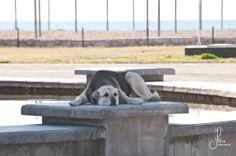 Türkei, Turkey, Titreyengöl, beach, Strand, dog,  photography by Jana Bath 2014, http://www.foto-bath.de