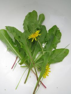 Dandelions (Taraxacum officinale) are herbs and young spring leaves give a bitter flavour. Bitter foods are awesome for the digestion system.
