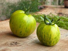 Bien récolter ses graines de tomates au potager