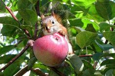 A squirrel a day!!