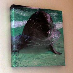 Smiling Dolphin – Canvas Wall Art
