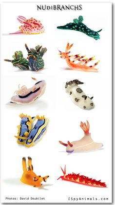Nudibranch, sea slugs.  One of the most colorful creatures in the world.