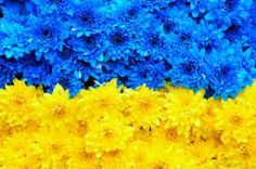 Ukrainian flag colors