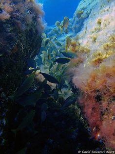 Immersioni in Sicilia – Top 5