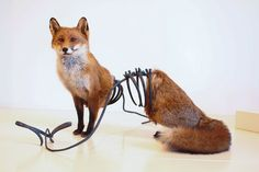 Unusual Taxidermy Sculptures by Idiots Art Collective - Beautiful/Decay