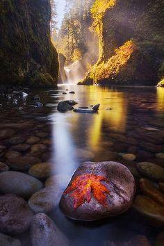 Autumn Leaf Punchbowl Falls Oregon