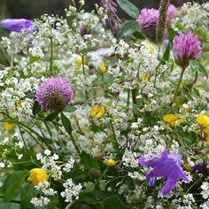 Ihanaa, aurinkoista juhannusta toivottaa Tiina! ☀️🌼🌿💖 . . . . #juhannus #juhannuskimppu #kesä #keskikesä #kesänjuhlaa #mittumaari Plants, Instagram, Plant, Planets