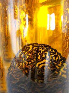 Kunst im #Einmachglas http://www.regina-basaran.de/ http://kunstreginabasaran.beepworld.de/ https://www.facebook.com/AtelierKarlstrasse