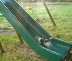 20 Funny Cat GIFs
