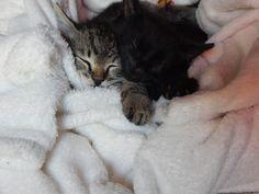 Mes petits chats d'amour, faire le deuil de mon petit chaton jazz, une période vraiment pas facile à surmonter qui fait toujours autant de mal.