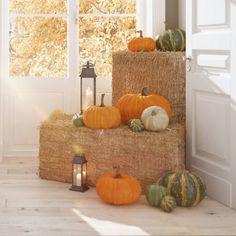 Happy Thanksgiving Sign, Thanksgiving Side Dishes, Thanksgiving Decorations, Pumpkin Wreath, A Pumpkin, Create A Flag, Fall Flower Arrangements, Decorative Gourds, Mini Pumpkins