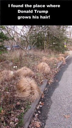 THIS IS WHERE DONALD TRUMP GROWS HIS HAIR GUYS! Get some for free today