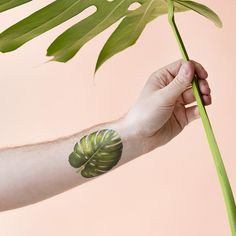 Leaf of the moment: Philodendron Monstera! Tattly temporary tattoo by Vincent Jeannerot.
