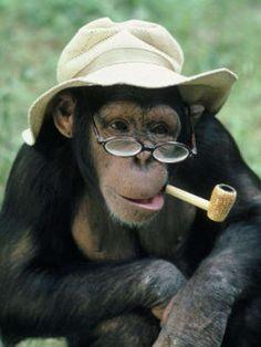 chimp smoking a corn cob pipe
