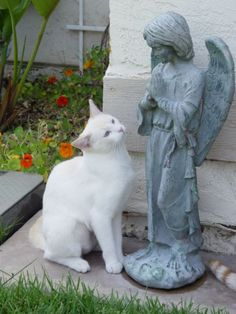 Dear Angel.. Please protect all animals.. Thank-you...bless us all