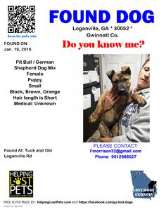 Found Dog - Pit Bull - Loganville, GA, United States